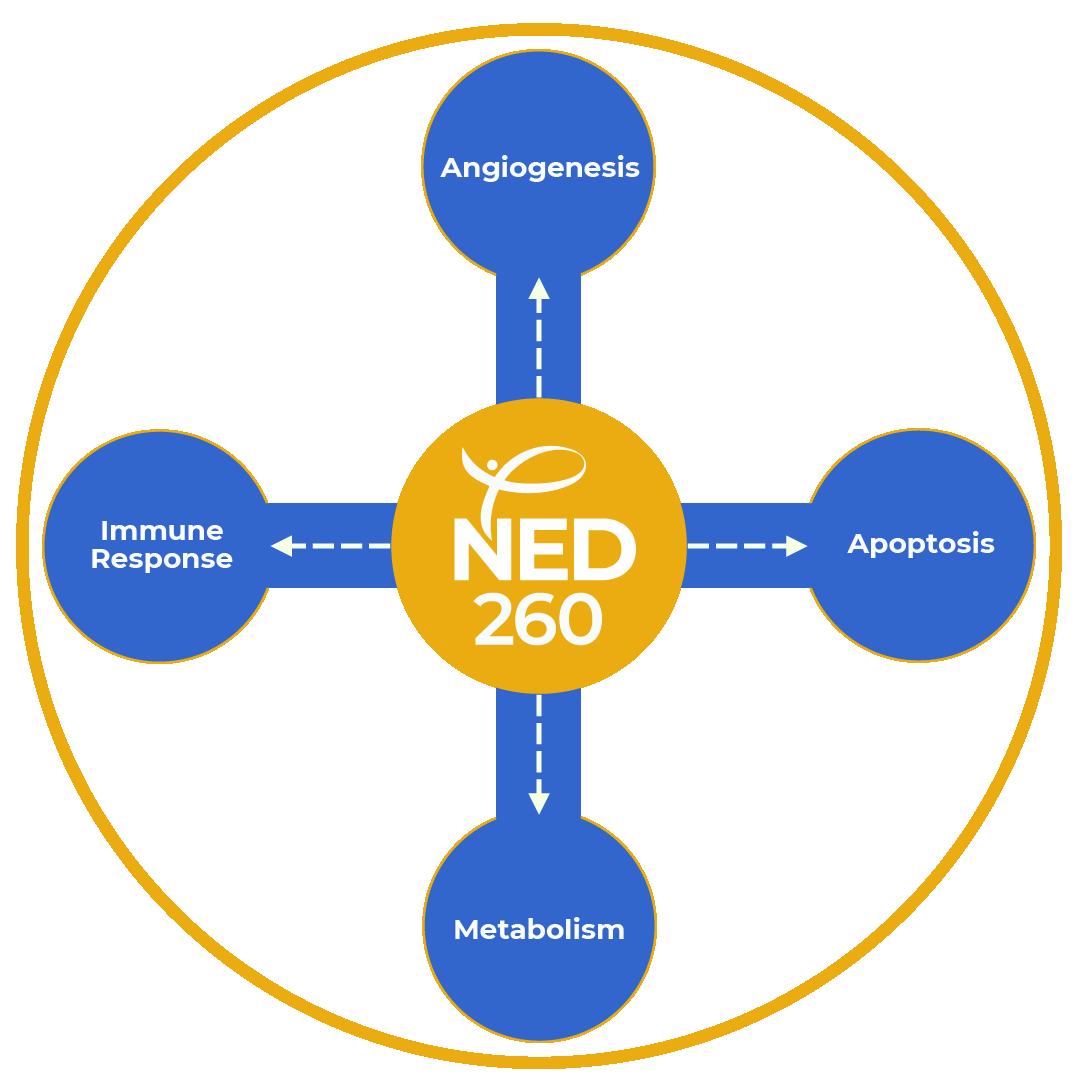 NED 260